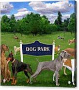 Dog Park Acrylic Print