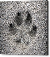 Dog Paw Print In Sand Acrylic Print
