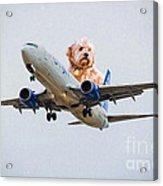 Dog Pilot Acrylic Print