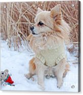 Dog Playing In Snow Acrylic Print