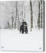Dog Running In The Snow Acrylic Print