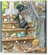 Dog Sitting On The Porch Of A Brownstone Selling Acrylic Print
