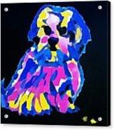 Dog-tibetin Lhasa Apsos Impression Acrylic Print