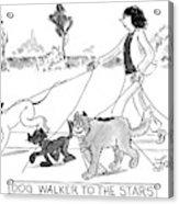Dog Walker To The Stars Acrylic Print