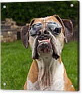 Dog Wearing Sunglass Acrylic Print by Stephanie McDowell