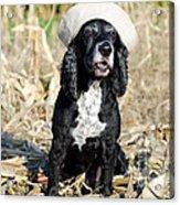 Dog With A Sailor Hat Acrylic Print