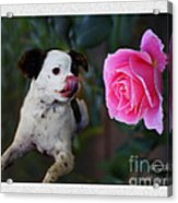 Dog With Pink Rose Acrylic Print