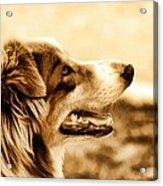 Doggie Face Acrylic Print