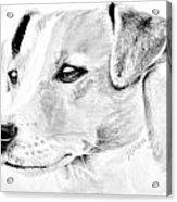Doggie Acrylic Print by Janet Moss