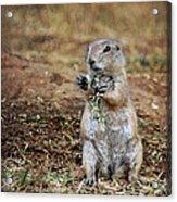 Doggie Snack Acrylic Print
