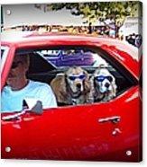 Doggies In The Window Acrylic Print