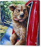 Dog...gone Happy Acrylic Print