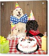 Doggy Birthday Party Acrylic Print by Jan Tyler