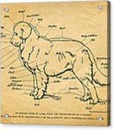 Doggy Diagram Acrylic Print by Tom Mc Nemar