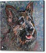 Doggy Dreams Acrylic Print