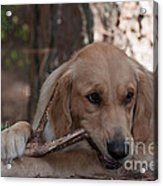 Doggy Heaven Acrylic Print