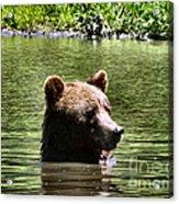 Doggy Paddle Acrylic Print