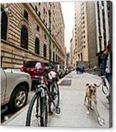 Dogs 1 Acrylic Print
