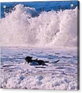 Dogs At Carmel California Beach Acrylic Print