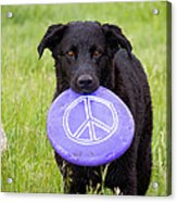 Dogs For Peace Acrylic Print