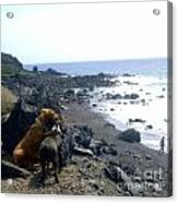 Dogs On The Beach Acrylic Print
