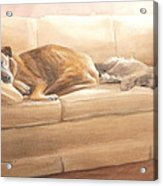 Dogs Sleeping On Couch Watercolor Portrait Acrylic Print