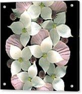 Dogwood And Poppies Acrylic Print