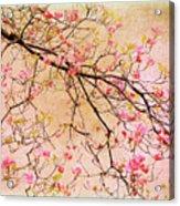 Dogwood  Canvas Acrylic Print