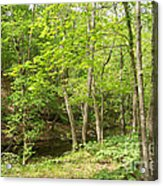Dogwood Canyon Acrylic Print