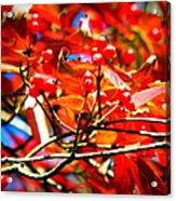 Dogwood In Autumn Acrylic Print