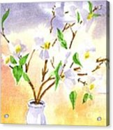 Dogwood In Watercolor Acrylic Print