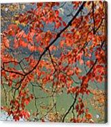 Dogwood Tree Acrylic Print