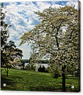 Dogwoods In Summer Acrylic Print