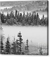 Dolly Sods Wilderness D300_10363_bw Acrylic Print