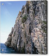 Dolomite Cliff With Guillemot Colony Acrylic Print