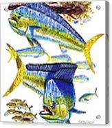 Dolphin In Weedline Acrylic Print
