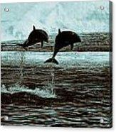 Dolphin Pair-in The Air Acrylic Print