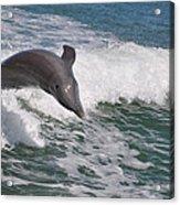 Dolphin Riding The Waves Acrylic Print