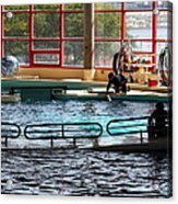 Dolphin Show - National Aquarium In Baltimore Md - 1212107 Acrylic Print by DC Photographer