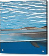 Dolphin Show - National Aquarium In Baltimore Md - 121211 Acrylic Print by DC Photographer