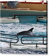 Dolphin Show - National Aquarium In Baltimore Md - 1212115 Acrylic Print by DC Photographer