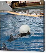 Dolphin Show - National Aquarium In Baltimore Md - 1212164 Acrylic Print