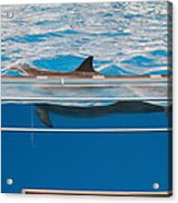 Dolphin Show - National Aquarium In Baltimore Md - 1212173 Acrylic Print