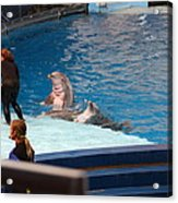 Dolphin Show - National Aquarium In Baltimore Md - 1212174 Acrylic Print by DC Photographer