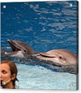 Dolphin Show - National Aquarium In Baltimore Md - 1212177 Acrylic Print
