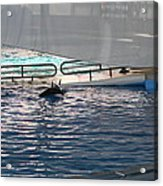 Dolphin Show - National Aquarium In Baltimore Md - 121218 Acrylic Print