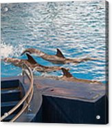 Dolphin Show - National Aquarium In Baltimore Md - 1212186 Acrylic Print