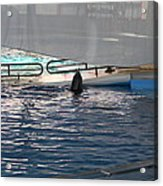 Dolphin Show - National Aquarium In Baltimore Md - 121219 Acrylic Print