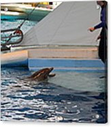 Dolphin Show - National Aquarium In Baltimore Md - 1212195 Acrylic Print