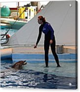 Dolphin Show - National Aquarium In Baltimore Md - 1212196 Acrylic Print by DC Photographer
